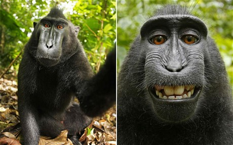 The copyright case of the monkey selfie